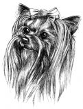 Yorkshire Terrier Puppy Receipt Book